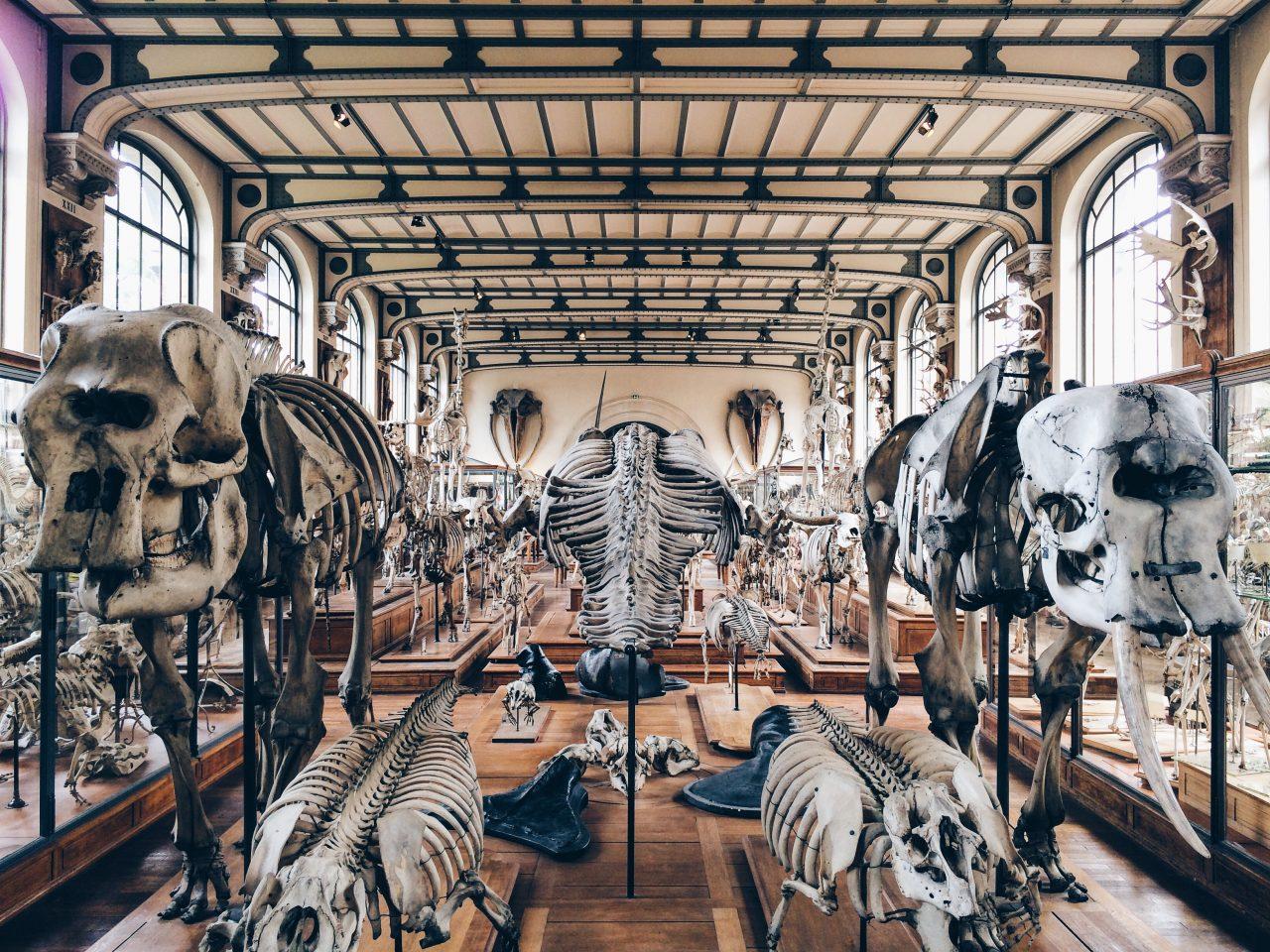 Museum of Natural History, Paris — Ala Champ